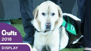 dogs-for-good-display-crufts-2018