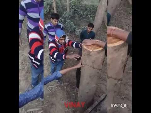 """Dilbar jaaniya song download alisha chinai (from """"alisha."""