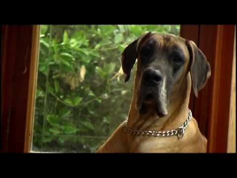 Alberta Fire Safety Secuirty - Men's Best Friend - Dogs Commercial - Malta