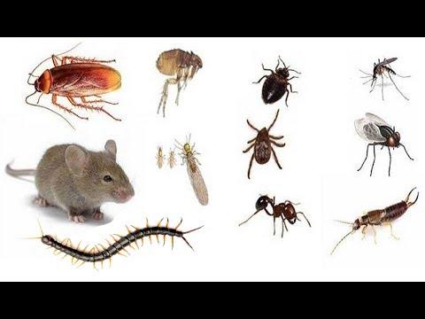 Libera tu casa de insectos con estos 8 remedios caseros y - Bichos bola en casa ...