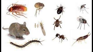 Libera tu Casa de Insectos con estos 8 Remedios Caseros y Sin Químicos!