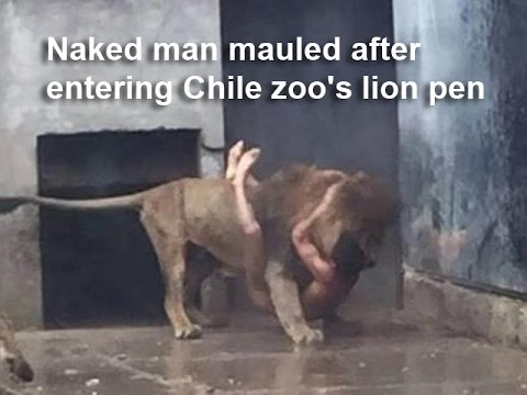 Naked Man jumps into Lion enclosure at Santiago Zoo in Chile