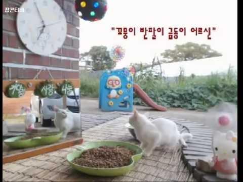 Cats Meok Bang : Stray Cats in South Korea [팝콘티비 BJ도둑고양이 나비월드] 160821 꼬꼬짱 오후6시50