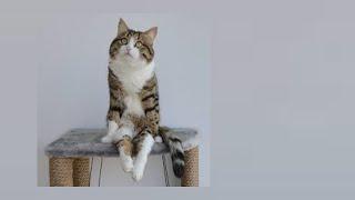 видео Цистит у кошек и котов