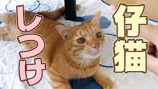 【しつけ】仔猫の時にしておいた方が良かった4つのこと 【甘噛・抱っこ・爪切り・お風呂】 [4K]