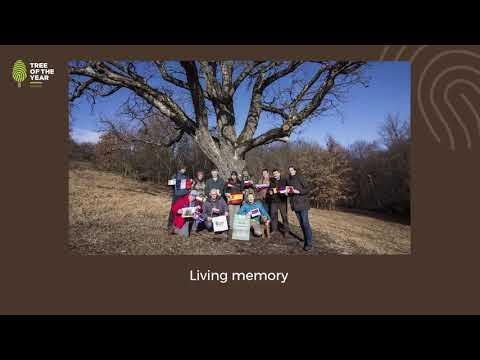 Одинокий тополь занял третье место в конкурсе Европейское дерево года 2020