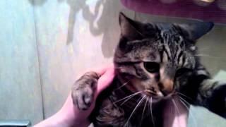 Кот боится воды(С котом все хорошо., 2014-10-02T19:04:05.000Z)