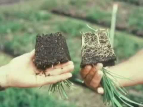 Benefits of Living the Natural Way - Dirt Doctor, Howard Garrett