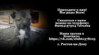 Домашний мини приют  Ушастая Няня  ПРОСИТ ПОМОЩИ
