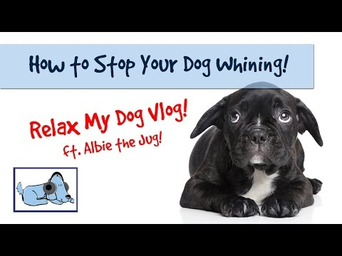 Anti Whining Dog Collar