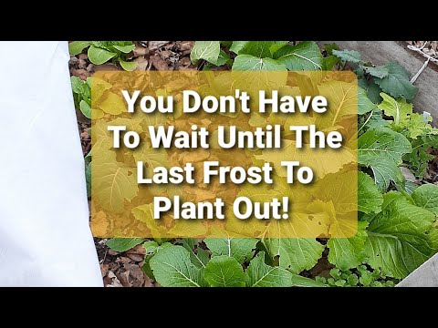 Crops You Can Plant Out BEFORE Your last Frost Date!