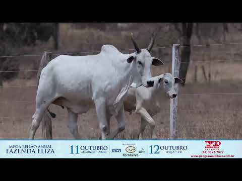 LOTE 223