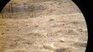 CARL ZEISS TERRA ED 8X25 Binocular