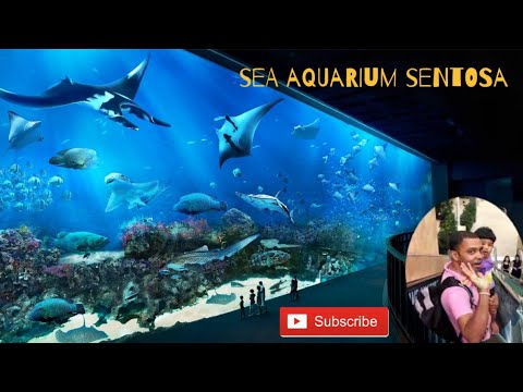 sea aquarium sentosa 2016.09.27 happy journey together