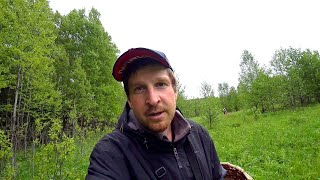 За грибами к водоёму в первый день лета Маслят много но уже не то