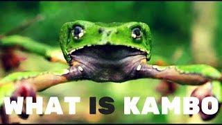 What is Kambo | Kambo Frog Medicine | Kambo Ceremony | Kambo Experience