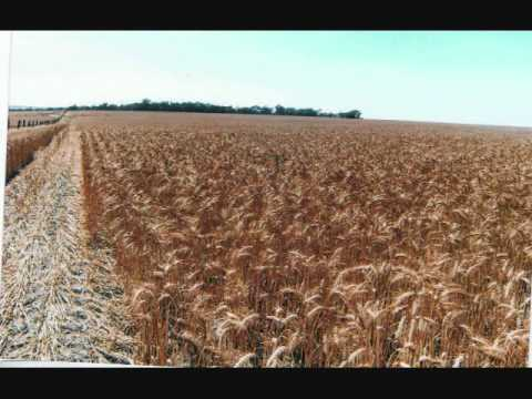 Australian Farm For Sale