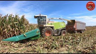 Chopping High Moisture Corn near Fort Recovery Ohio