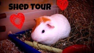 Guinea Pig Shed Tour *april 2014*