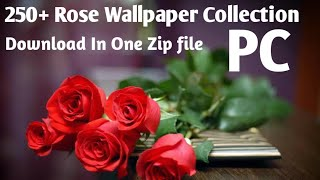 Rose Wallpapers Collection | Full Hd Rose Flowers | New Rose Wallpaper 2020