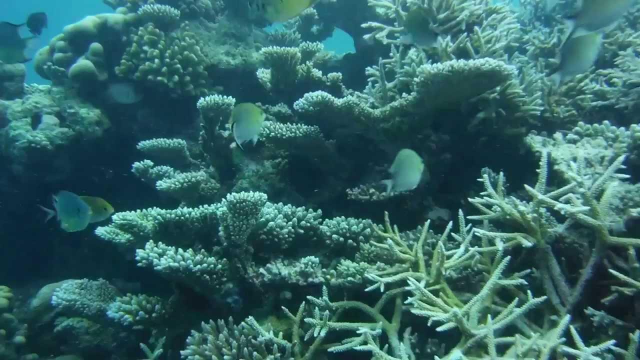 FinePix XP70 Underwater Movie In Maldives FUJIFILM