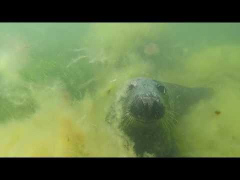 BIG FISH DIVE CLUB. Scuba diving with Baltic Seals.