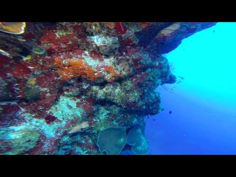 Grand Turk Diving 2015