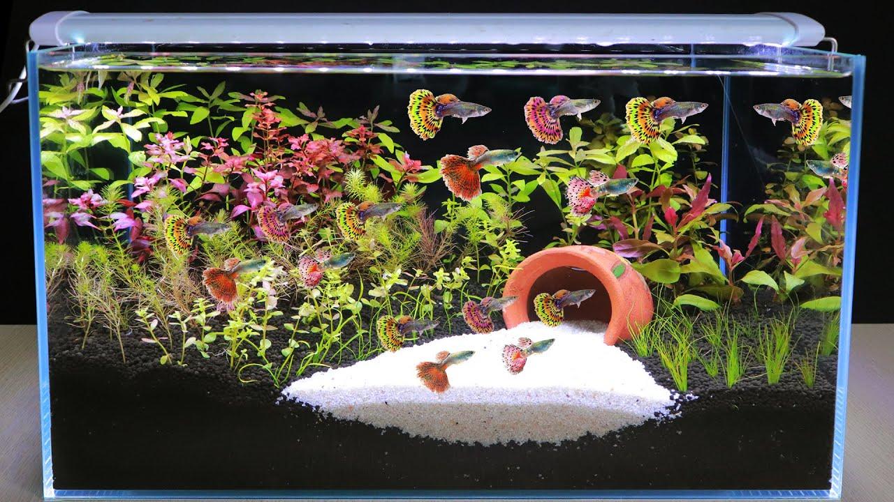 How To Make Plant Aquarium For Guppies | Diy Aquascape No ...