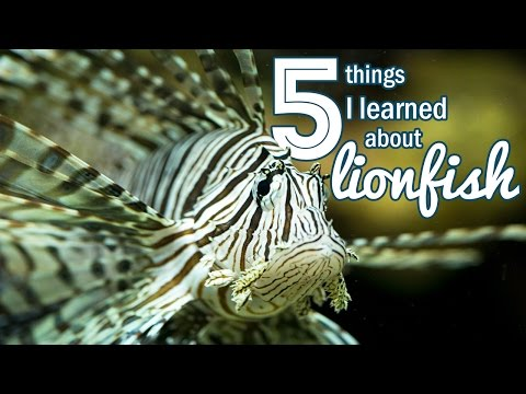 5 Things I Learned About Lionfish