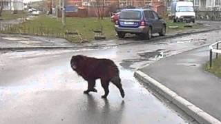 Странная собака в Вологде ч.2