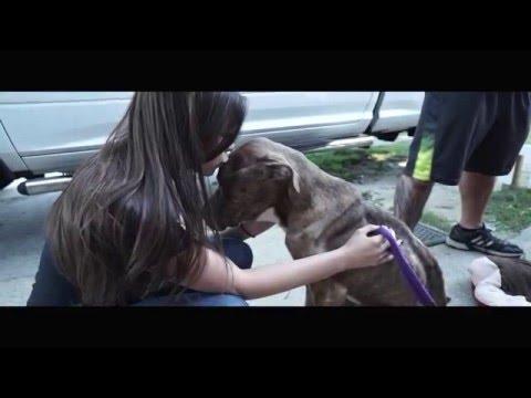 New York Bully Crew  |  D'Angelo's Story