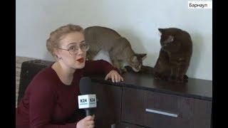 Всемирный день кошек празднуют 1 марта в России