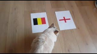 Prediksi BELGIA VS INGGRIS VERSI KUCING || FIFA WORLD CUP 2018