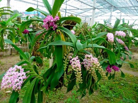 40 loài hoa lan rừng đẹp nhất