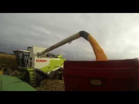 Récolte 2014 du maïs (haute landes)
