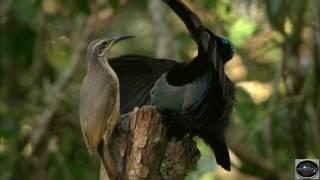 Doku Deutsch Australien Riesenvögel