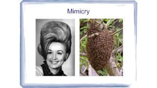 BAHFest East 2014 - Rob DenBleyker: Hair Theory