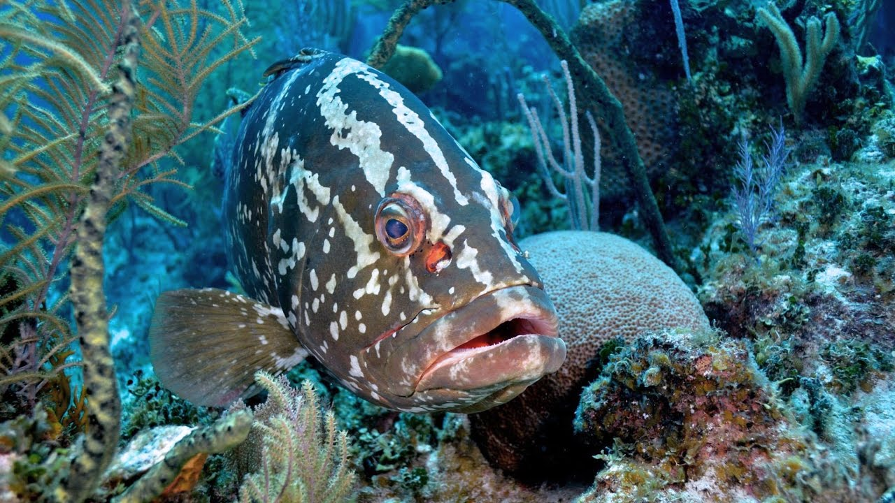 self proclaimed grouper capital of the world - 1280×720