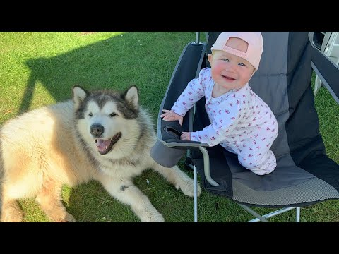 Van Life With Dogs | Come On Holiday With Us! (Mia's First Camping Trip)