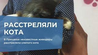 В Прикамье неизвестные живодеры расстреляли слепого кота