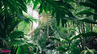 Axian - Amazonas