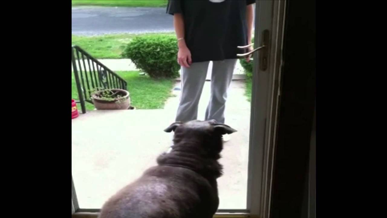 Dog Wonu0027t Go Through Door Missing Glass   YouTube