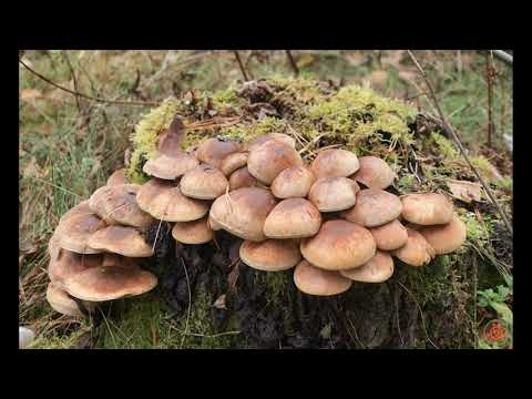 3 класс в царстве грибов видеоурок