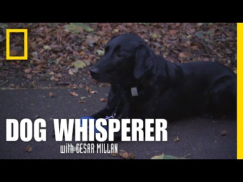 An Invisible Leash | Dog Whisperer