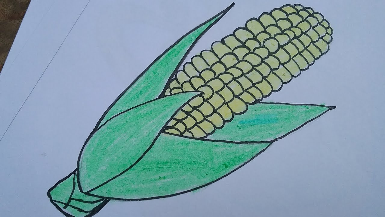 How to draw a corn with basic shapes,drawing and colouring ...