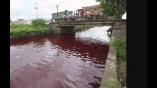 River turns blood RED overnight 2014