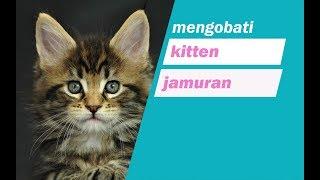 mengobati jamuran pada kitten atau anak kucing dengan VCO