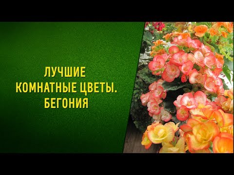 комнатные цветы для скорпионов по гороскопу