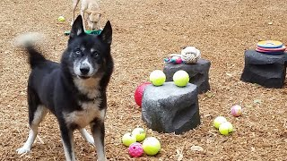 Project Pawsitive Builds an Eco-Friendly Bark Park for Buddy Dog Humane Society