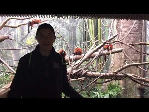 Bronx Zoo Spanish Video Project Tyler Z Kevin P Alex K Animal